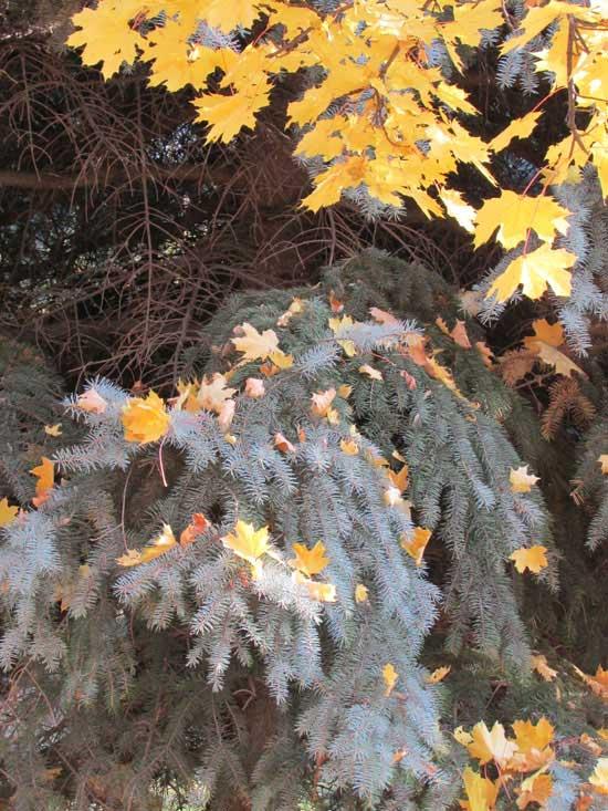 Осыпающаяся листва