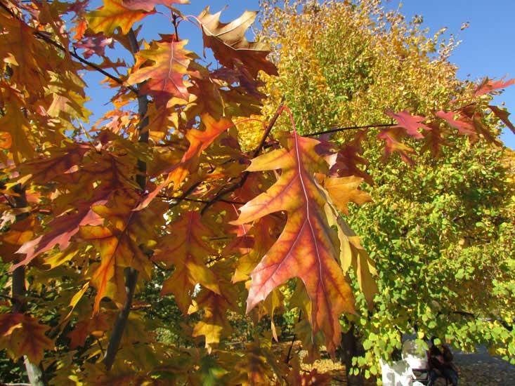 Оранжевые листья