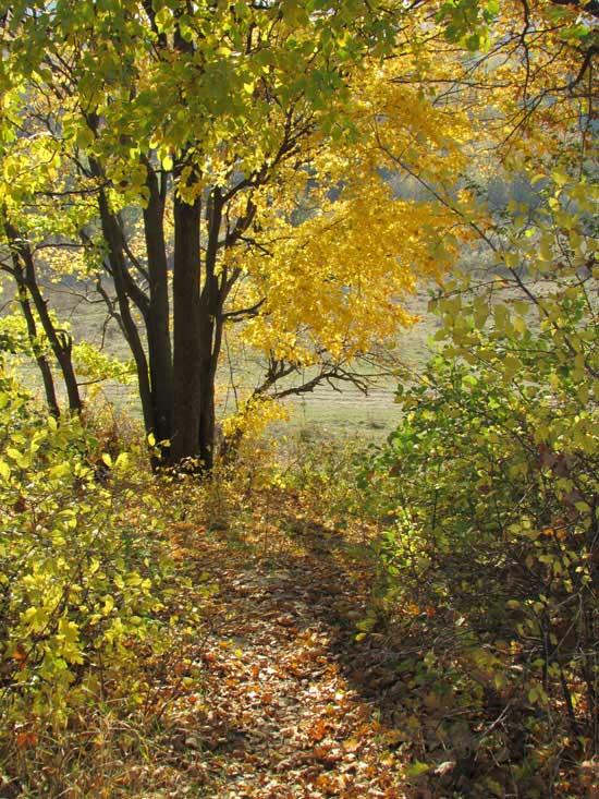 Дерево в лесу