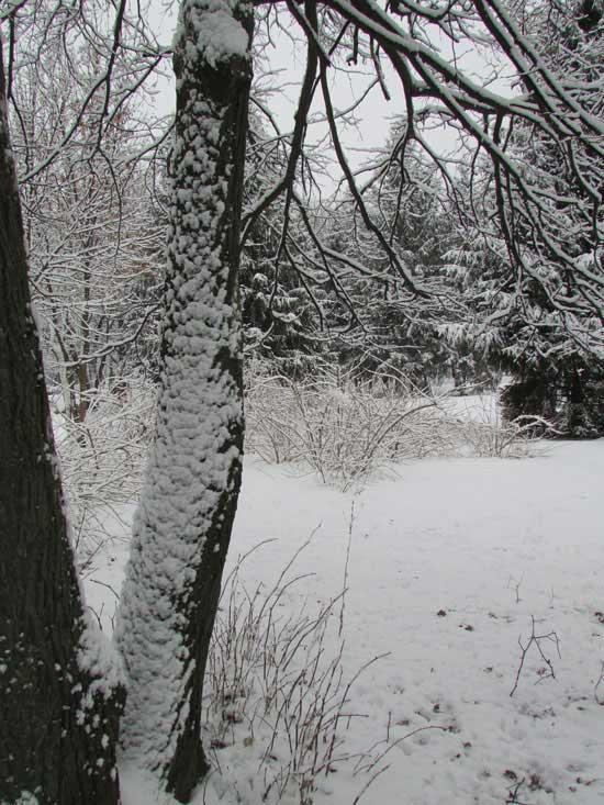 Снег в лесу.