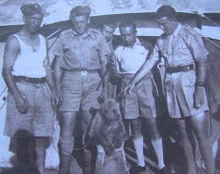 1 medvezhonok sredi soldat